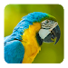 Download Bird Sounds 1.3 APK