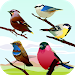 Download Bird Sounds 1.0 APK