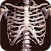 Download Osseous System in 3D (Anatomy) 2.0.10 APK
