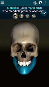 Download Osseous System in 3D (Anatomy) 2.0.9 APK