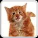 Download CAT LICKS LIVE WALLPAPER FREE 1.1 APK
