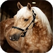 Download Horse Wallpapers 2.0 APK