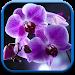 Download Orchids Live Wallpaper 1.0.6 APK