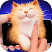 Download Pat the Cat Face SImulator 1.0 APK