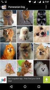Download Pomeranian Dog Wallpapers Hd 1 0 Apk Downloadapk Net