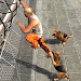 Download Prisoner Escape - Police Dog 1.5.1 APK