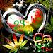 Download REGGAE LOVE+PEACE LWP Trial 1.1.1 APK